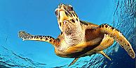35. Deniz Kaplumbağaları Sempozyumu Türkiye'de