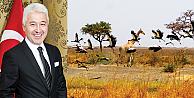 Kamerun'a Gitmeden Kazanılmaz