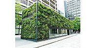 Şehirlerde ağaç taşta yetişecek