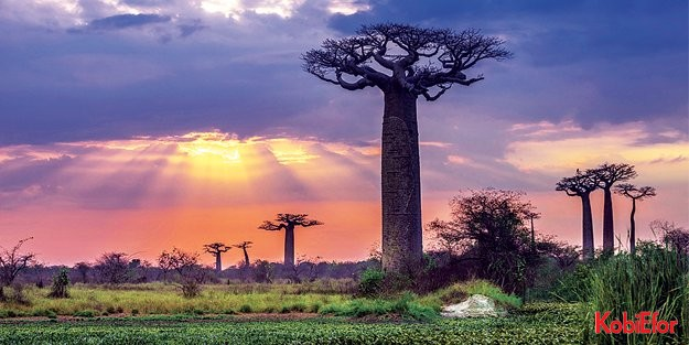 Türkiye'nin Doğu Afrika'daki pazar hedefleri: MADAGASKAR-MOZAMBİK-TANZANYA