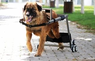 Engelli hayvanları hayatabağlayan Vestel'e,...