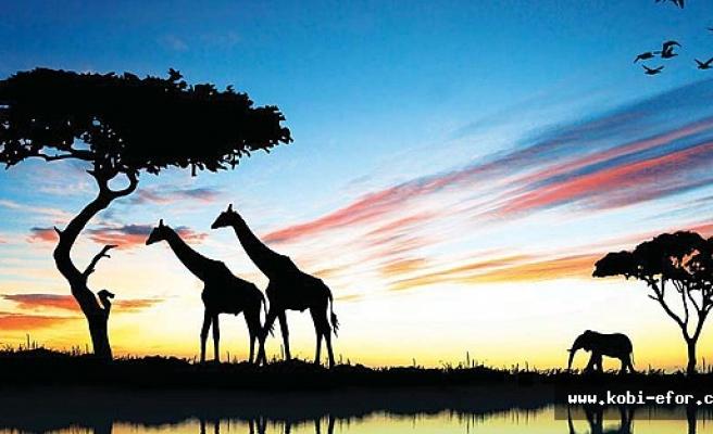 Dünyanın en hızlı büyüyen kıta ekonomisi, gideni büyüten AFRİKA