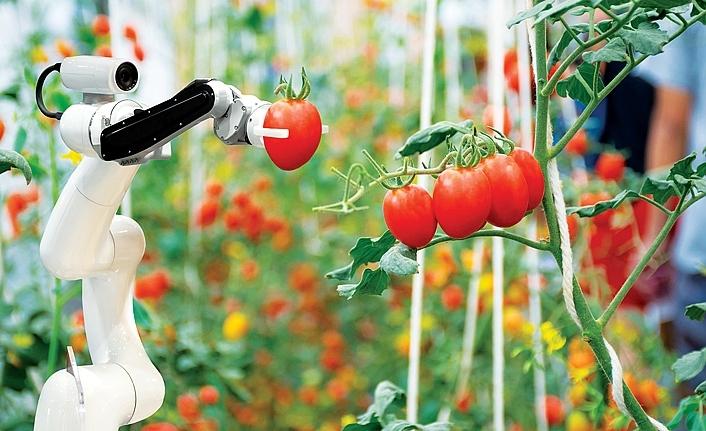 Tarıma yapay zeka